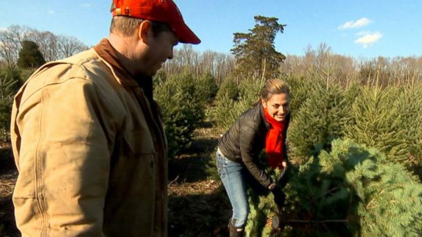 The Secrets to Finding the Perfect Christmas Tree