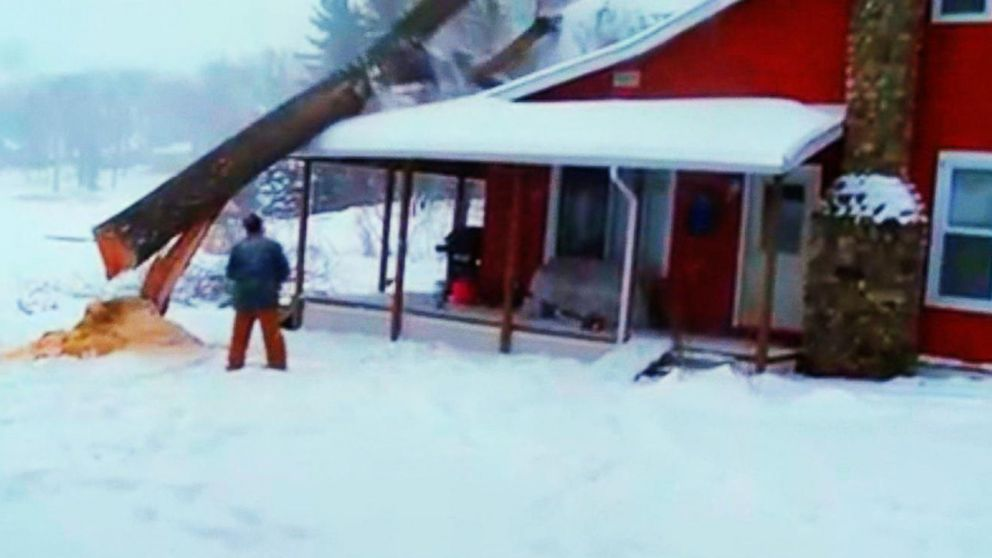 Caught On Camera Tree Cutting Fails And Mishaps Video