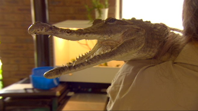 VIDEO: Meet Vicki Lowing and her reptilian road trip companion.