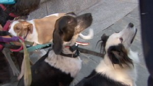 VIDEO: Funny Dog Stories