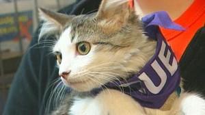 VIDEO: Pets displaced after Hurricane Katrina