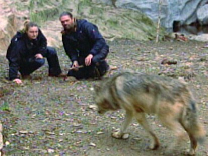 Going to Extremes: Woman Feeds Wolves