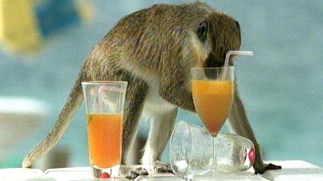 PHOTO:Monkey