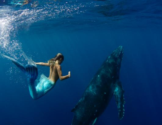 Real Sea Mermaids http://abcnews.go.com/widgets/mediaViewer/image?id=10778934