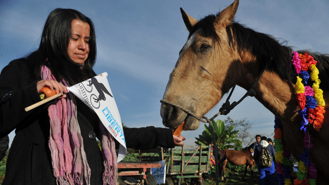 PHOTO: A veterinary student receives a horse which used to be used in a drawn-cart on February 26, 2013, in Bogota, Colombia.