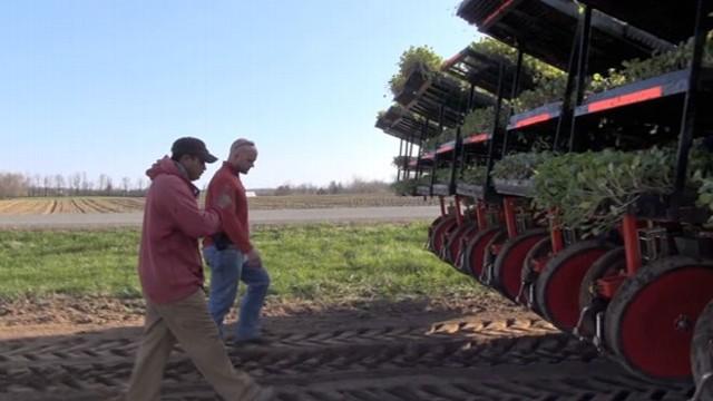 Eric Hansen of Hansen Farms in upstate New York walks through his cabbage field with guest worker Heli Enrique Silva Pelaz.