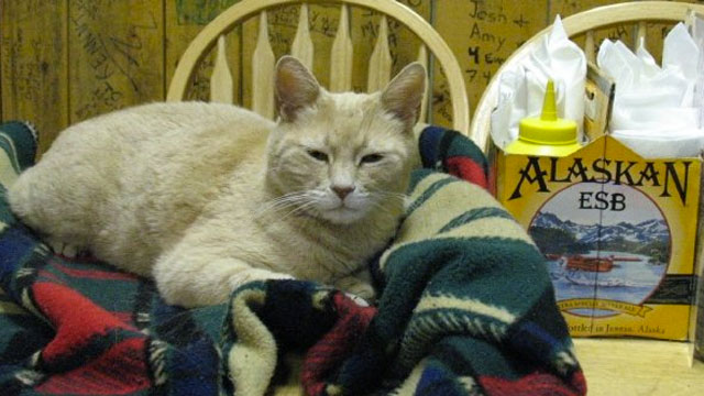 PHOTO: Stubbs, has been mayor of Talkeetna, Alaska, for the past 15 years.