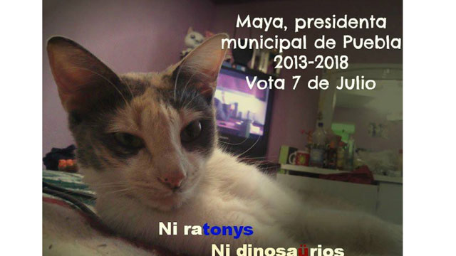PHOTO: Maya, the Cat, is running for mayor of Puebla.