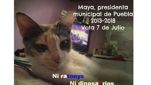PHOTO:Maya, the Cat, is running for mayor of Puebla.