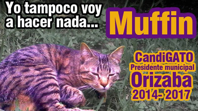 PHOTO:Muffin, a cat, is running for mayor of Orizaba, a town in Veracruz state.