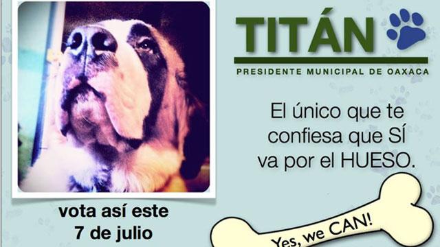 PHOTO:Titan, a St Bernard, is running for mayor of Oaxaca, Mexico.