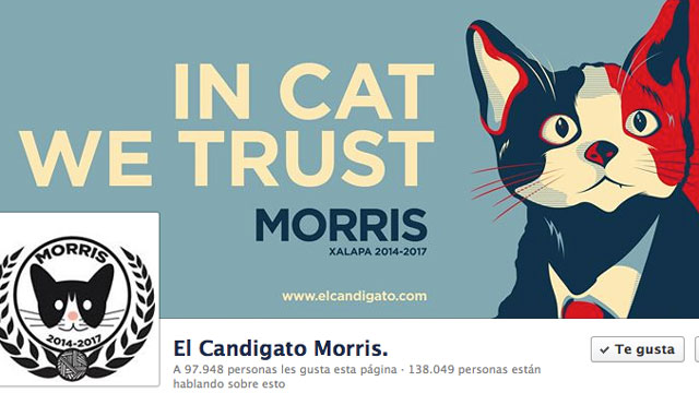 PHOTO: Morris, a cat is runnig for mayor of Xalapa Mexico.