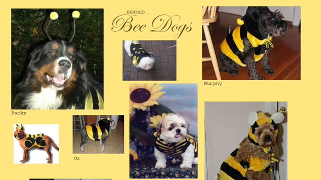 PHOTO:What's better than animals? Animals dressed as other animals.