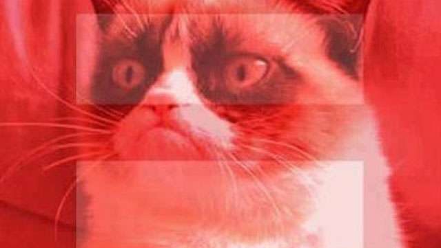 PHOTO:Grumpy Cat loathes us all. Equally.