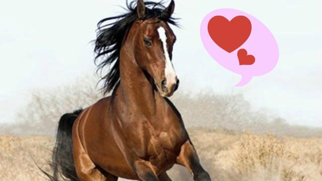 PHOTO: Horse_ebooks can teach us how to love.