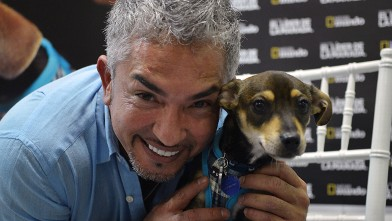 PHOTO:MIAMI, FL - OCTOBER 15: Cesar Millan attends screening of Of El Lider De La Manada on October 15, 2012 in Miami, Florida.