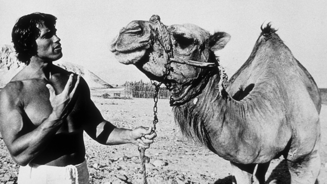 PHOTO: OCTOBER 1977: Bodybuilder Arnold Schwarzenegger poses with a camel in 1977 in Israel.