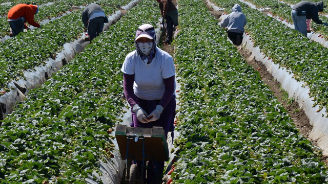 Will Immigration Reform Help Immigrant Farm Workers?