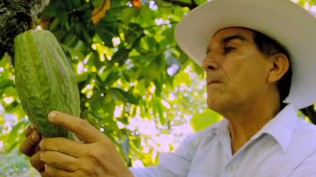 PHOTO: A cacao farmer.
