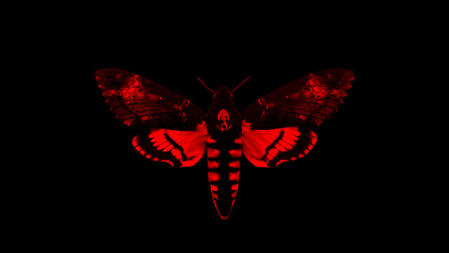 "PHOTO:Lil Waynes newest album ""I Am Not A Human Being II"""
