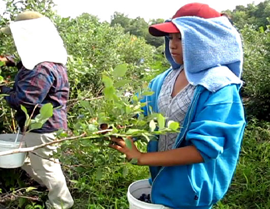 Young Children Found Working in Fields Across America
