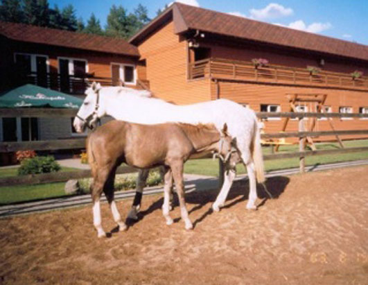 CIA Secret 'Torture' Prison Found at Fancy Horseback Riding Academy