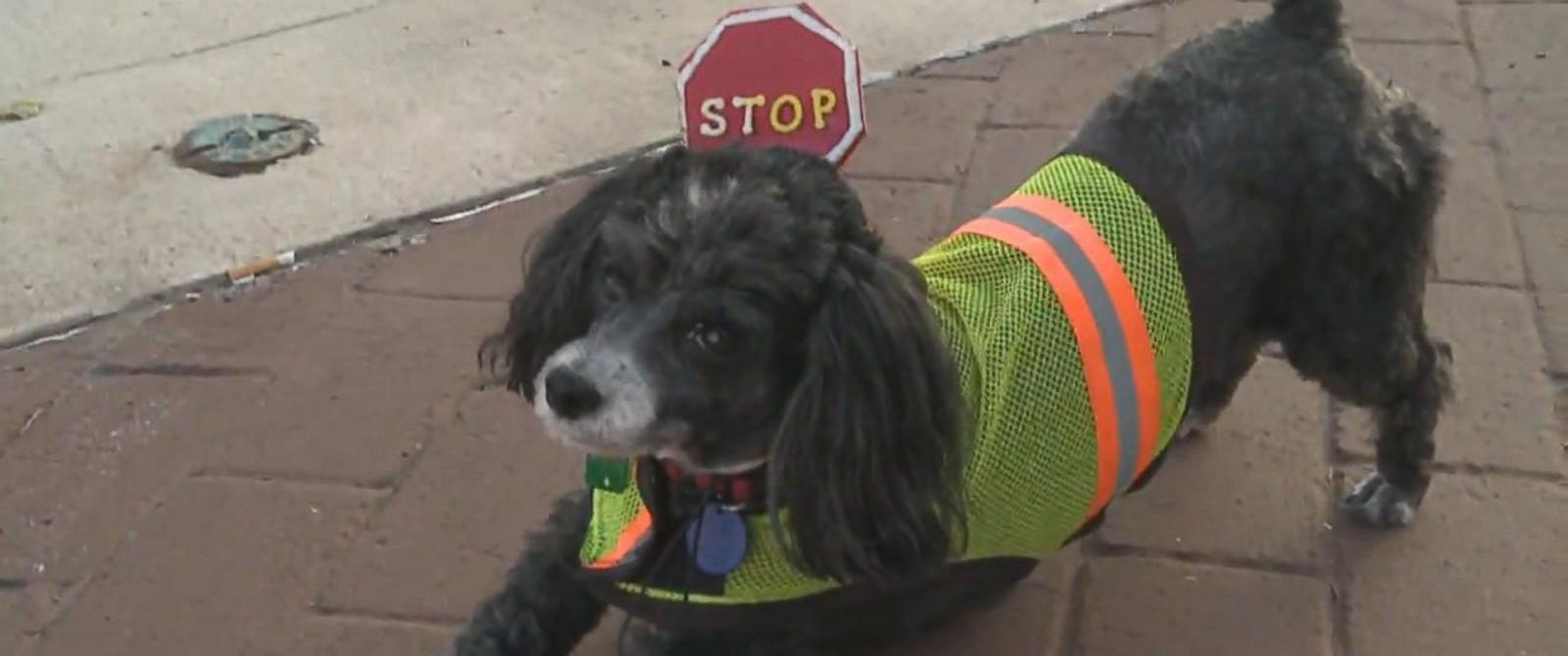 Dog Vest Patches Photo Patches The Dog Wears a