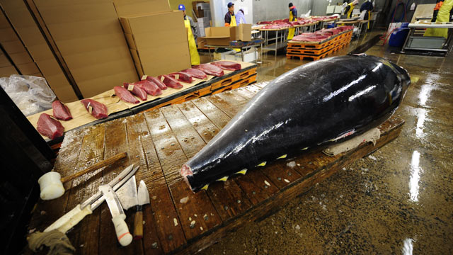 PHOTO: A bluefin tuna is unloaded on its way to be cut and distributed to New Yorks top sushi restaurant at a fish market, Jersey City, New Jersey, March 12, 2010.
