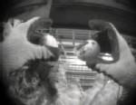 Yucky Eggs: Salmonella Outbreak Scandal