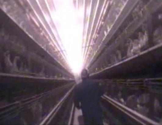 An undercover investigator for the animal rights group Mercy for Animals worked at different egg farms run by Sparboe Farms in Colorado, Iowa and Minnesota.