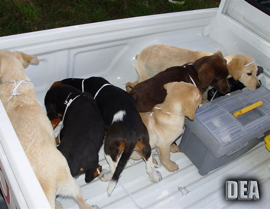 Puppies Used by Drug Traffickers to Smuggle Heroin