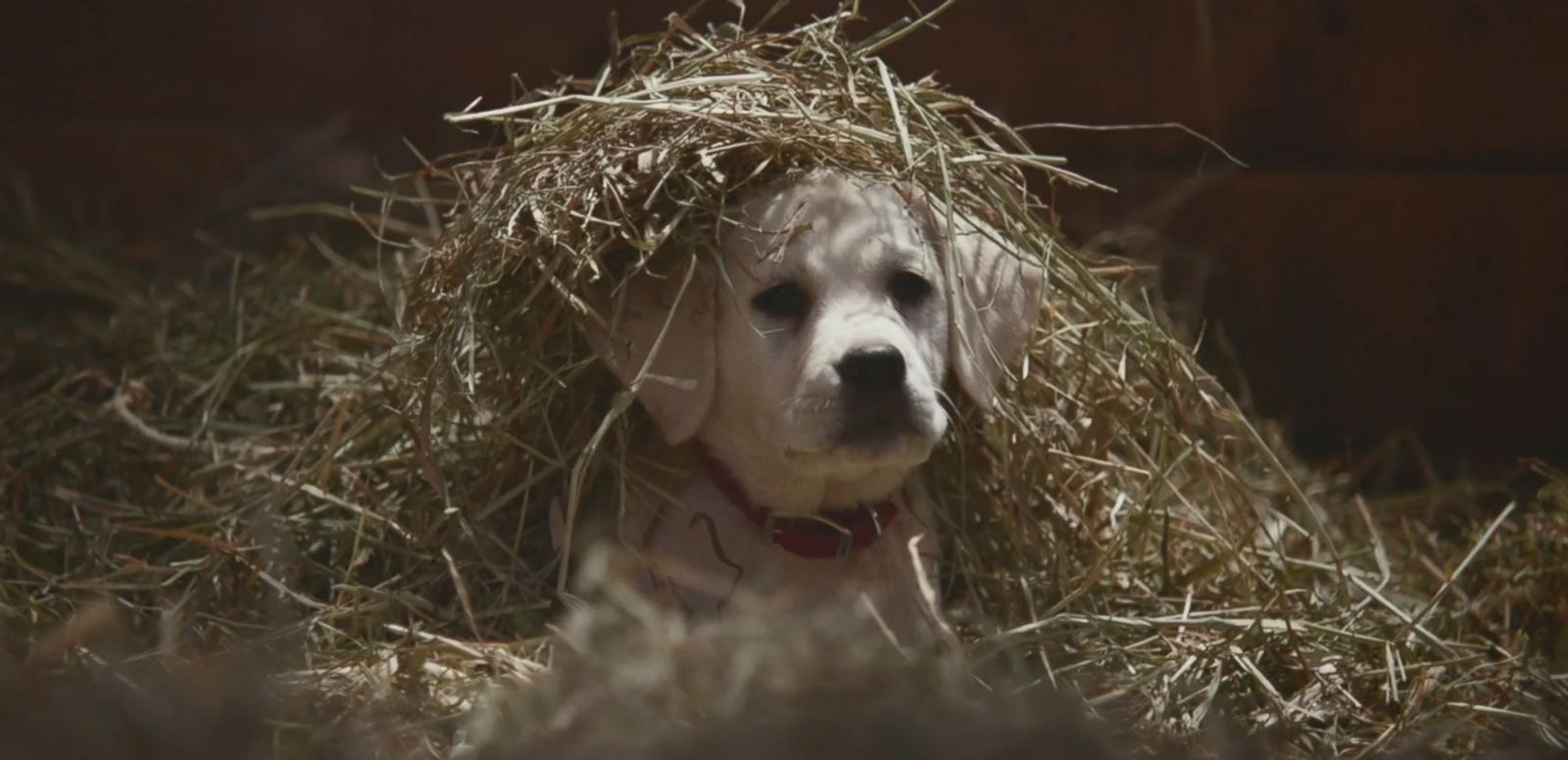 VIDEO: Watch the full commercial about a puppy reuniting with his Clydesdale best friend in Budweiser's spot for Super Bowl XLIX.