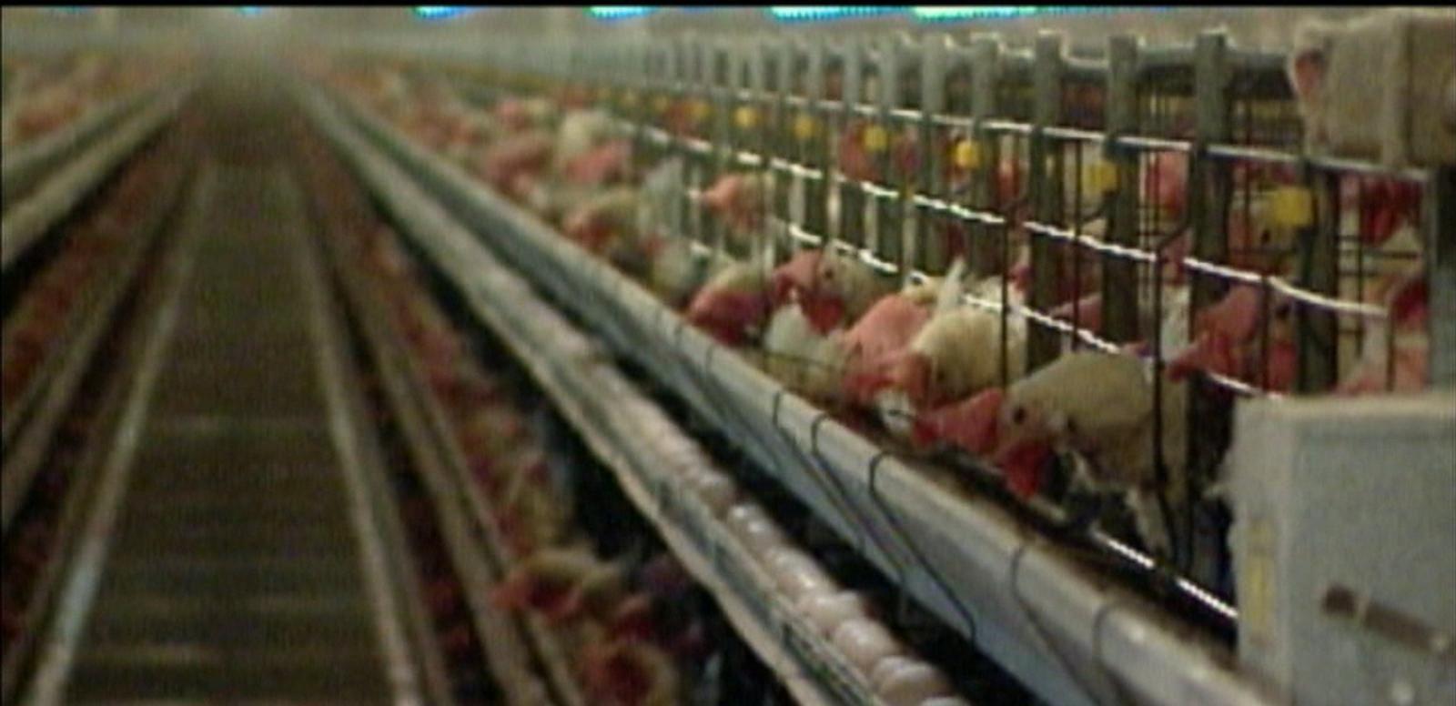 VIDEO: Bird Flu Outbreak Strikes Iowa