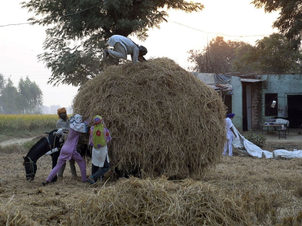 PHOTO:Indian villagers hold onto an overloaded horse cart while a worker presses the paddy stubble used as fuel and mixed into cattle feed at a village near Jalandhar on October 14, 2016.