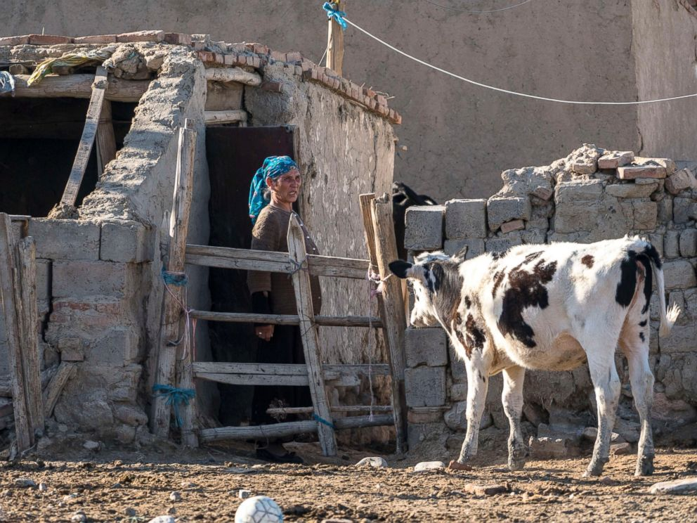 PHOTO: A female farmer with her cow in the Xinjiang Uygur Autonomous region. The difficulty in selling raw milk and low price of raw milk in China will continue in 2016 due to the relatively high farming cost and the impact of imported dairy products.