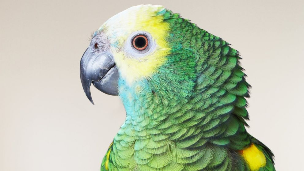 PHOTO: A green parrot perches on a branch in this undated file photo.