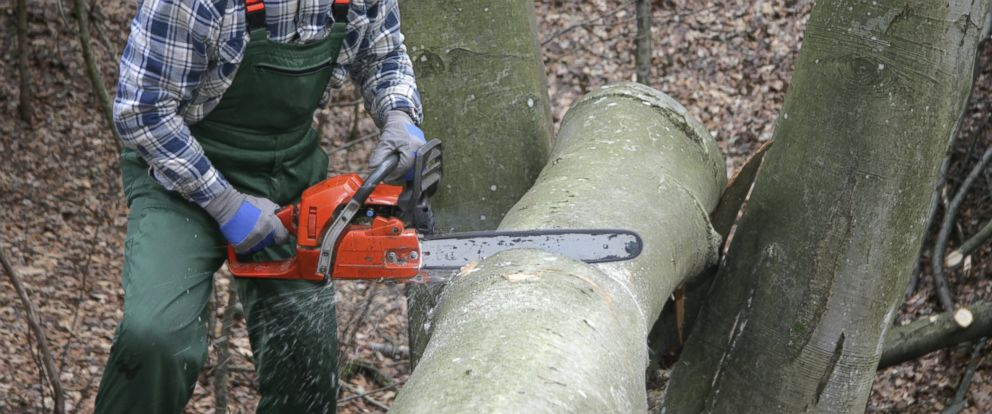 PHOTO: In this stock image, a lumberjack is pictured.