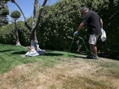 PHOTO: Green Canary president Shawn Sahbari sprays green water-based paint on a partially dead lawn