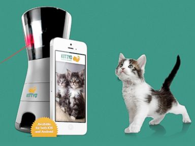 PHOTO: Kittyo launched a Kickstarter campaign, April 21, 2014.