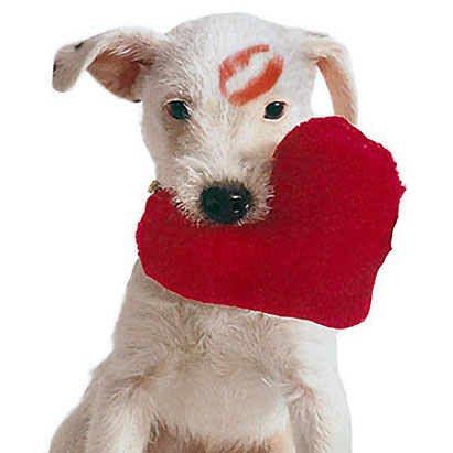 Don't Be a Love Sick Puppy on Valentines Day...