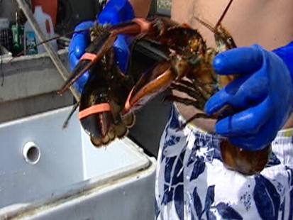 Video: Lobster fishing ban threatens New England businesses.