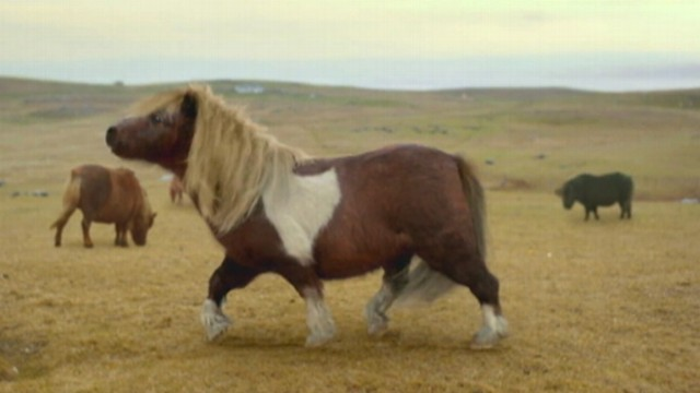 VIDEO: A Shetland ponys dancing moves are featured in commercial for mobile Internet firm, Three.
