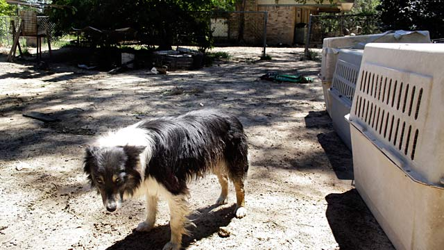 PHOTO: Border collie at puppy mill