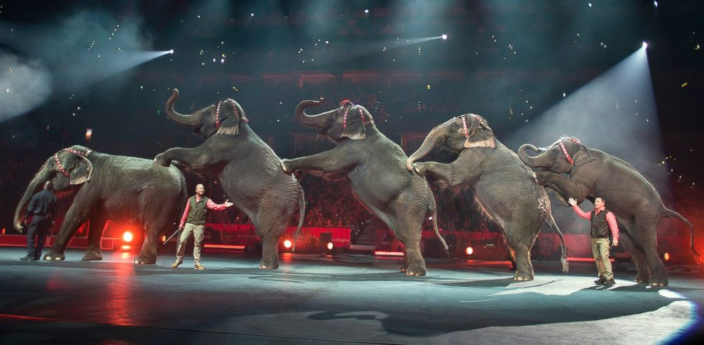 PHOTO: In this Jan. 3, 2015 photo provided by Feld Entertainment Inc., elephants perform at the Ringling Bros. and Barnum & Bailey Circus, at the Amalie Arena in Tampa, Fla.