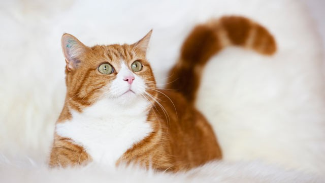 PHOTO: An orange cat, named Orlando, managed to pick more profitable stocks than a group of professional investment managers and a group of students.