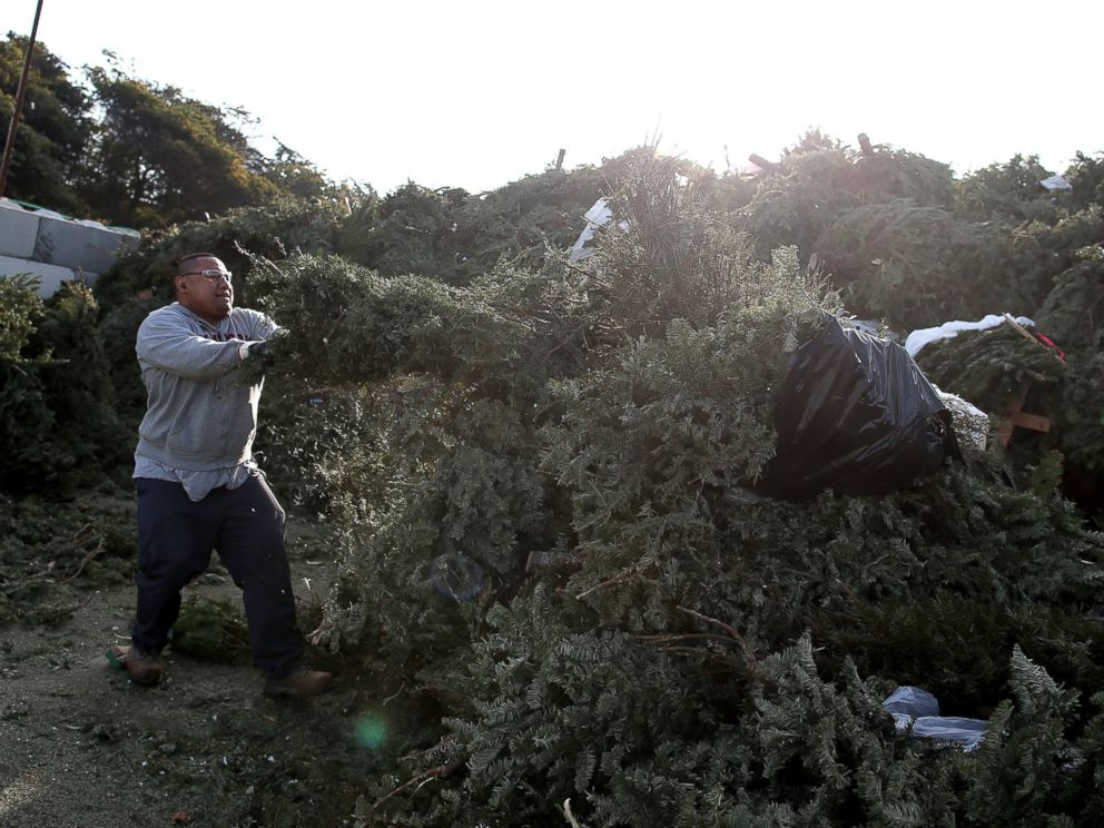 Wacky And Wise Ways To Get Rid Of Your Christmas Tree ABC News - San Francisco Christmas Tree Lots