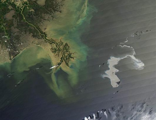 Gulf of Mexico Oil Spill Threatens Wildlife