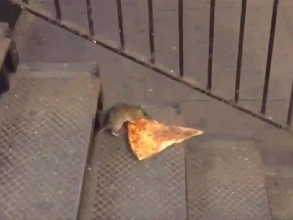 PHOTO: A rat was seen dragging a slice of pizza in New Yorks subway.