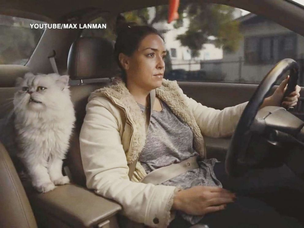 PHOTO: Max Lanmans commercial for his girlfriends Honda Accord shows a woman driving the car with a cat in her lap.