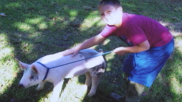 VIDEO: Chandler Beachs prized pig fetched $20,000 to benefit Corbin Wiggins.